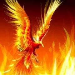h.phoenix
